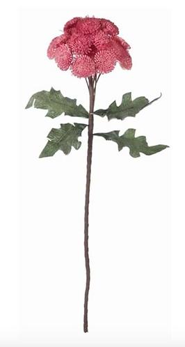 Hydrangea - Fiore