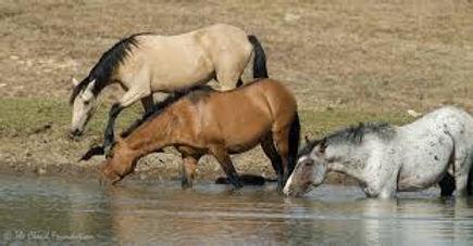wild horse 4.jpg