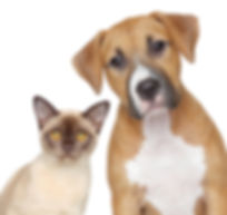 dog and cat 2.jpg