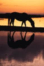 mirror horse.jpg