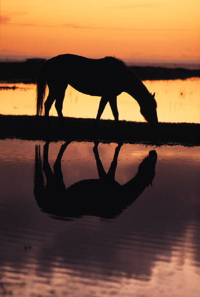 How Horses Transformed My Life - The Mystery in the Mirror