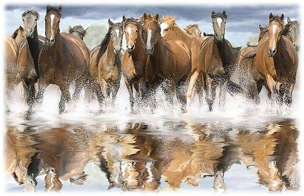 horses in water.jpg