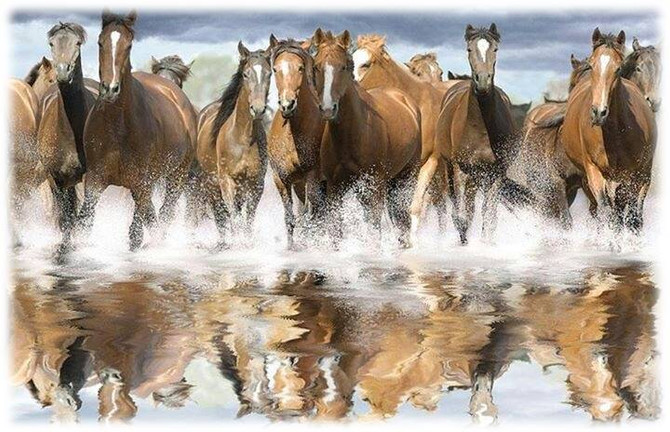 How Horses Transformed My Life - A Lesson in Congruence and Stress