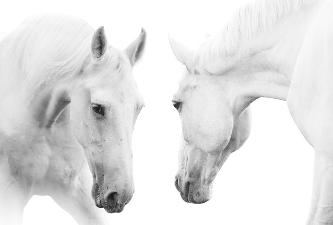 How Horses Transformed My Life - Listening to the Heart's Whispers