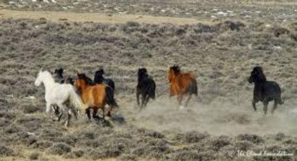 wild horse 3.jpg
