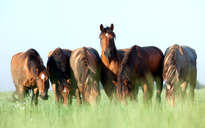 How Horses Transformed My Life - A Lesson In Awareness