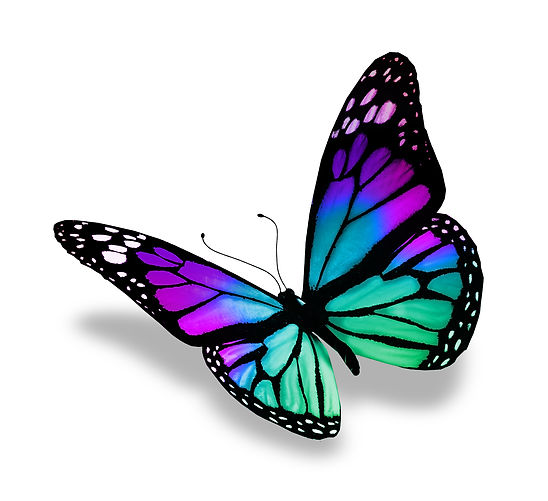 single butterfly logo colors.jpg