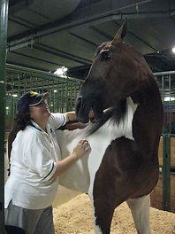 manual therapy on a horse