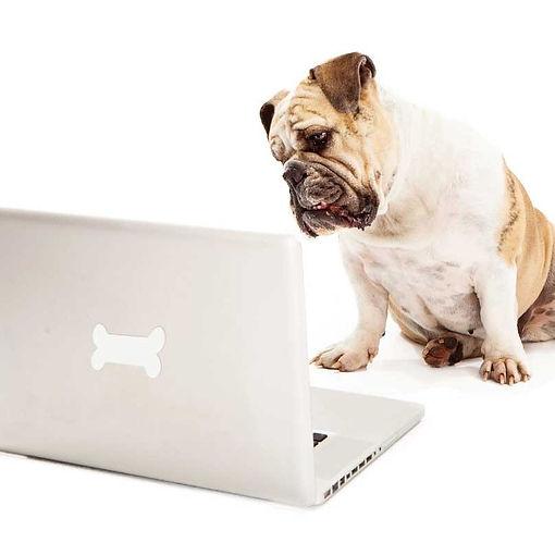 opitimized-dog-804x804.jpg