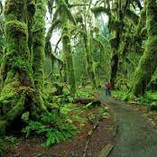 temperate rainforest.jpg