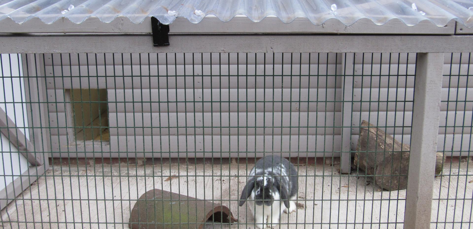 Bunny Lodge External Run