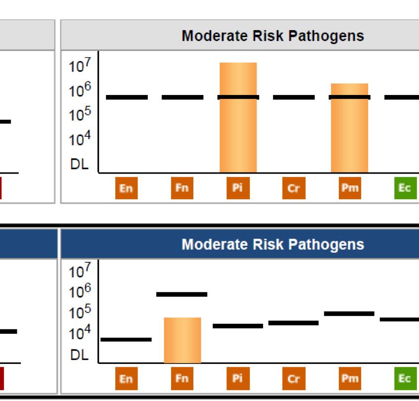 Perio Pathogen Test