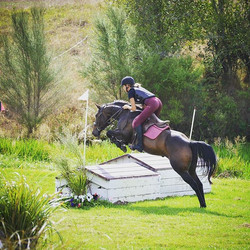 Such a talented young mare who is for sa
