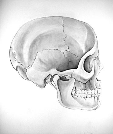 Skull- Watercolor