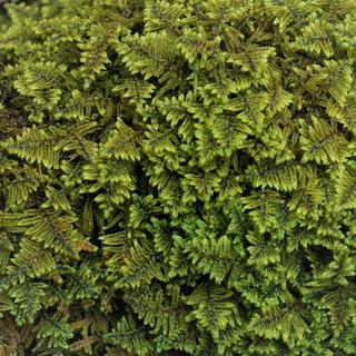 Springy Carpeting