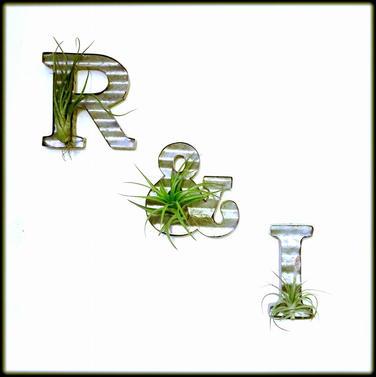 R & I: Air Plants