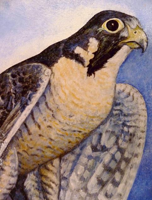 Peregrine Falcon: Acrylic