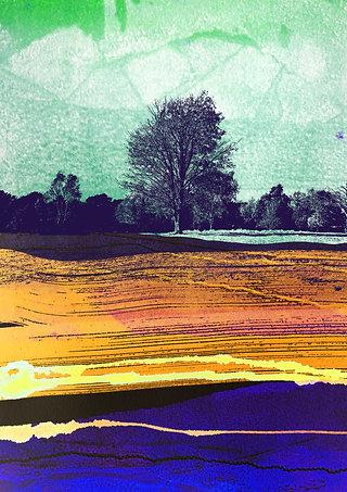 Meadow of Delight