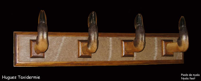 pieds+de+nyala+nyala+feet.jpg