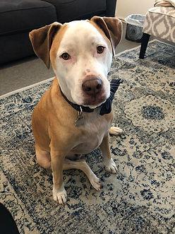 Alfie, the Sharon Feigenbaum's dog.