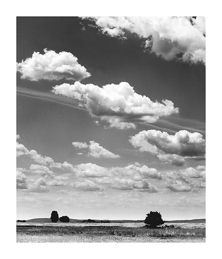 3-Trees.jpg