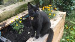 Rayne Hall - Sulu at Garden
