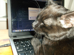 Rayne Hall - Sulu on Keyboard typing