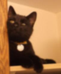 Rayne Hall - Sulu inside kitchen shelf