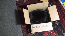 Rayne Hall - Sulu inside Cardboard B