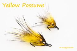 Yellow Possums copy.jpg