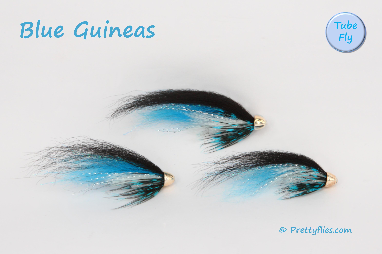 Blue Guineas copy.jpg