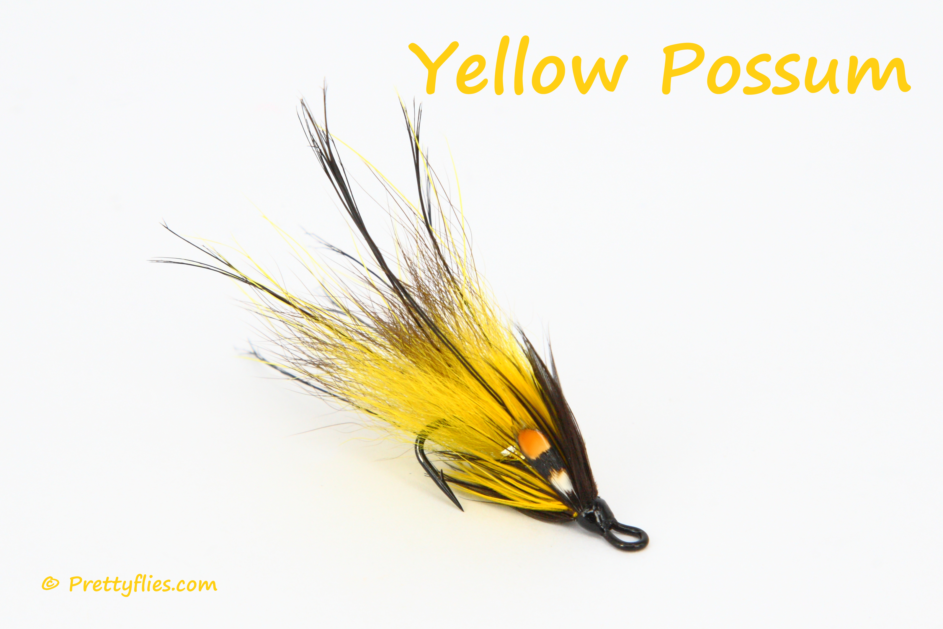 Yellow Possum copy.jpg