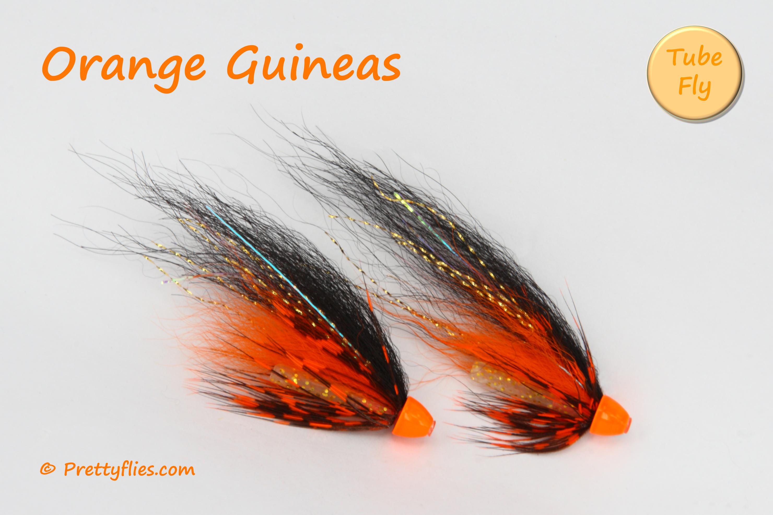 Orange Guineas copy.jpg