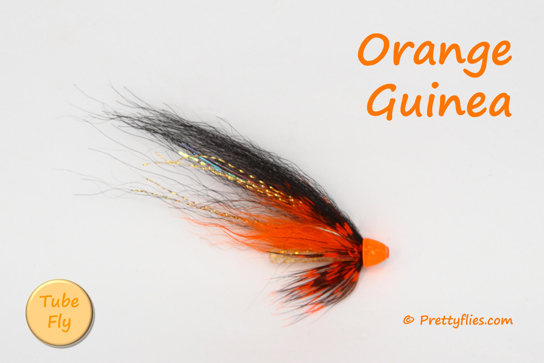 Orange Guinea copy.jpg