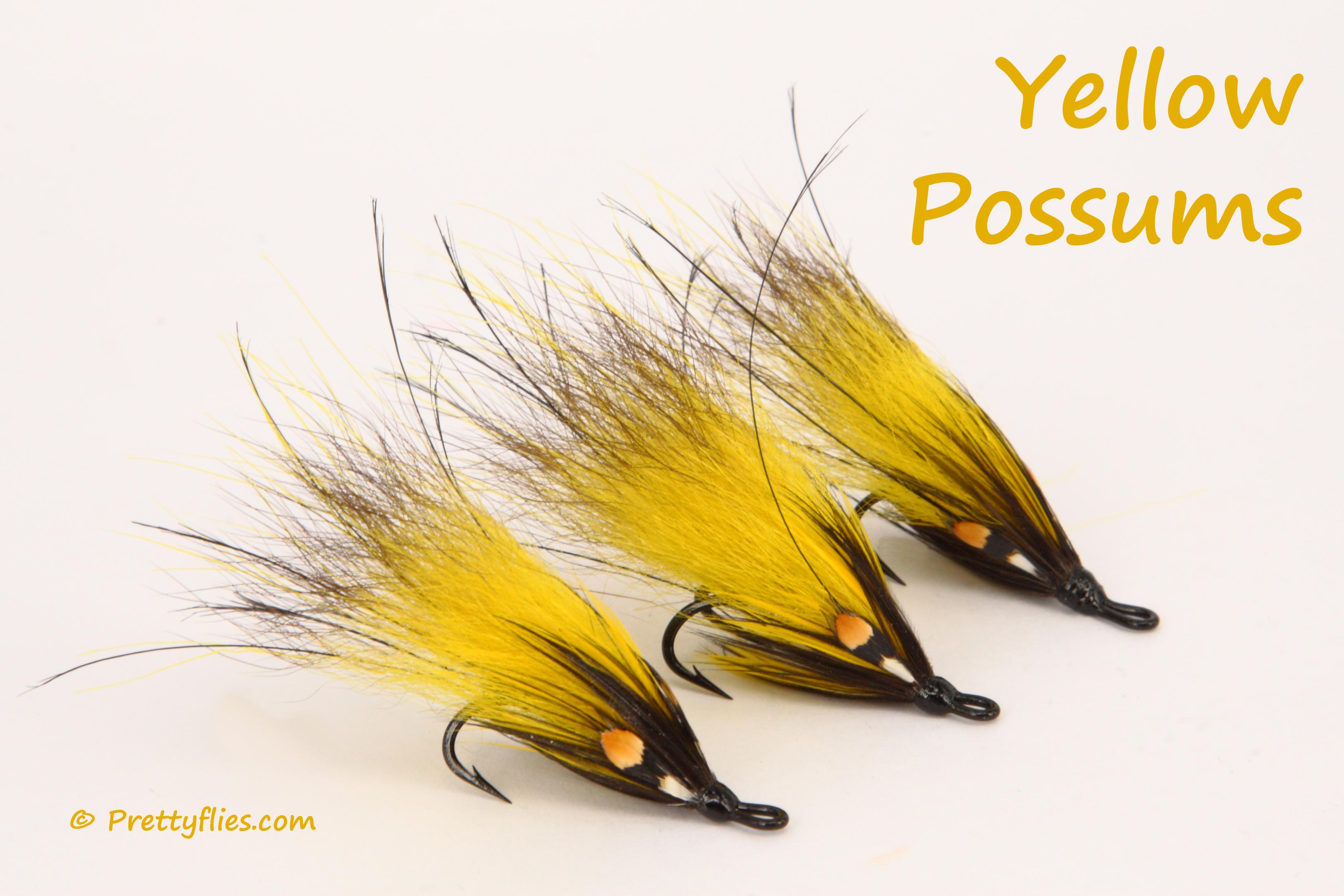 Yellow Possums Trio copy.jpg