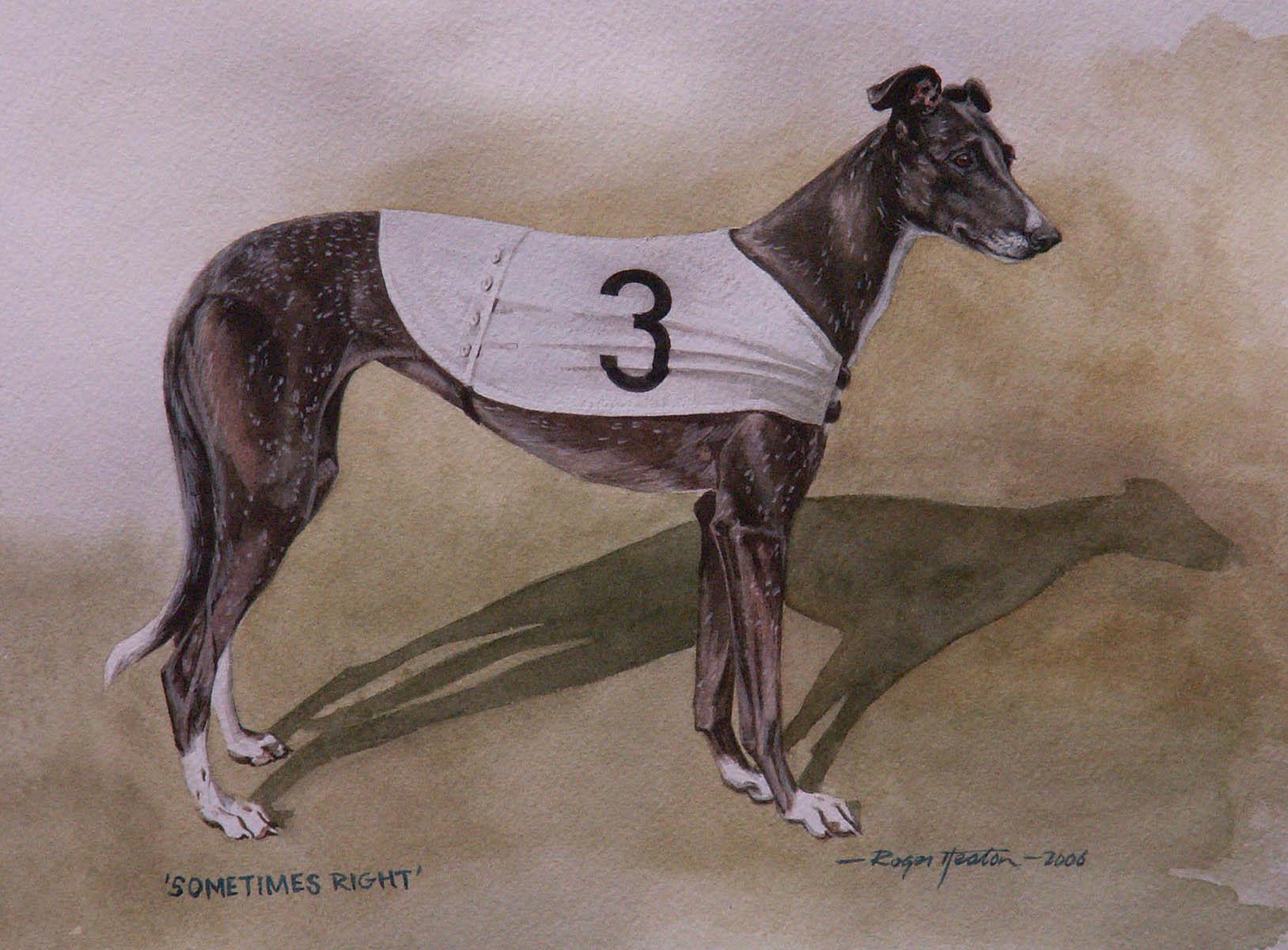 "Winning Greyhound ""Sometimes Right"""