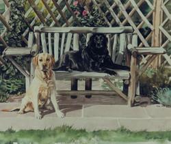 Labradors in garden settling
