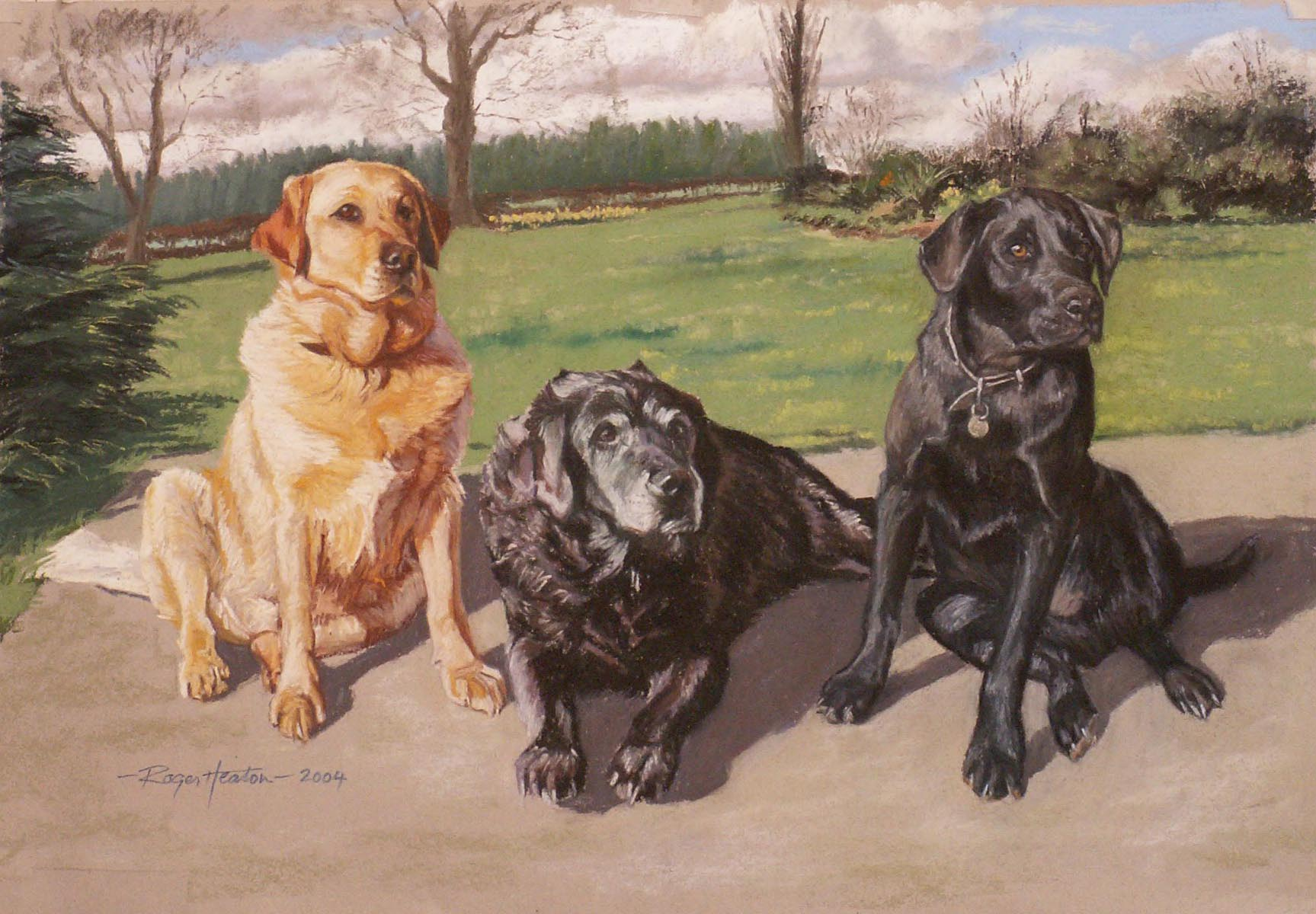 Three generations of Labradors