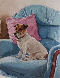 Jack Russell Terrier in setting