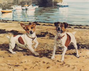 Jack Russell Terriers in setting