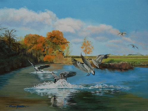 Goose Splashdown