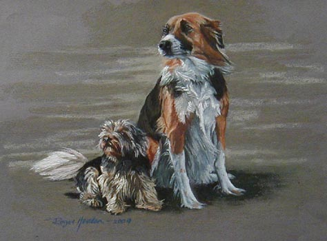 Border Collie with Yorkshire Terrier