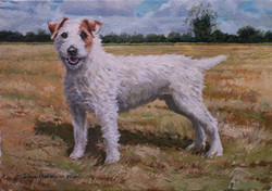 Wire haired Jack Russell Terrier