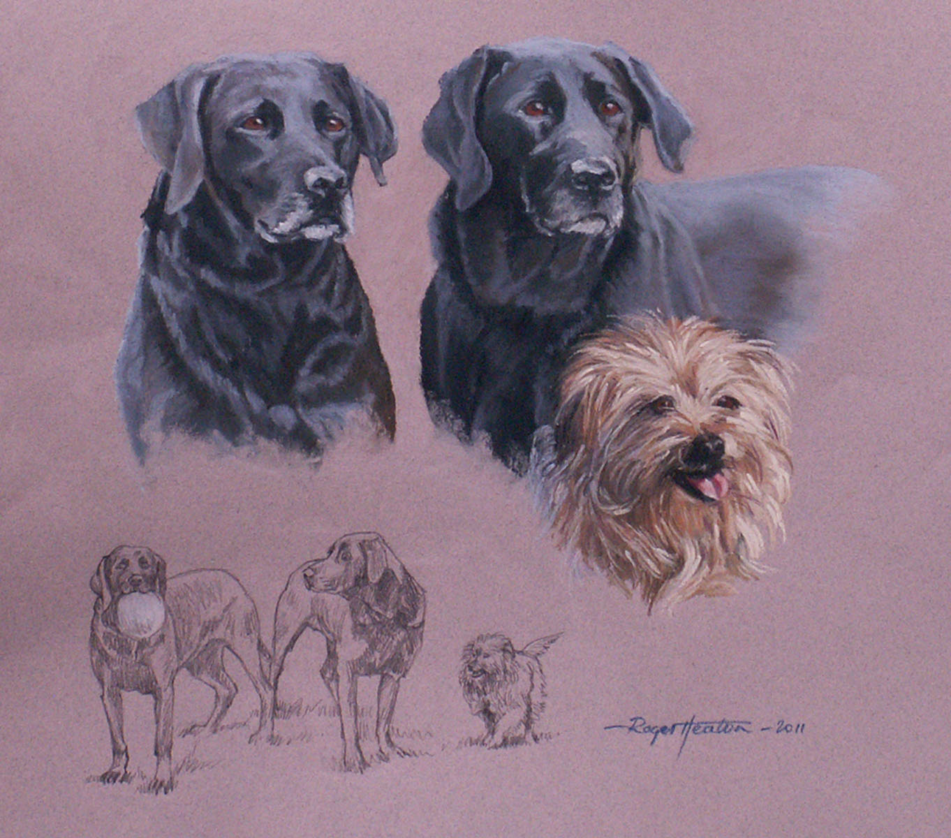 Labradors with Norfolk Terrier