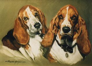 Bassett Hound pair