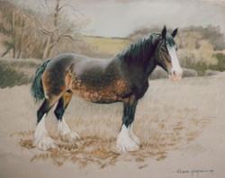 "Shire Horse ""June"""