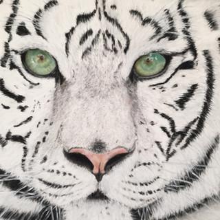 Tigre blanc de Sibérie