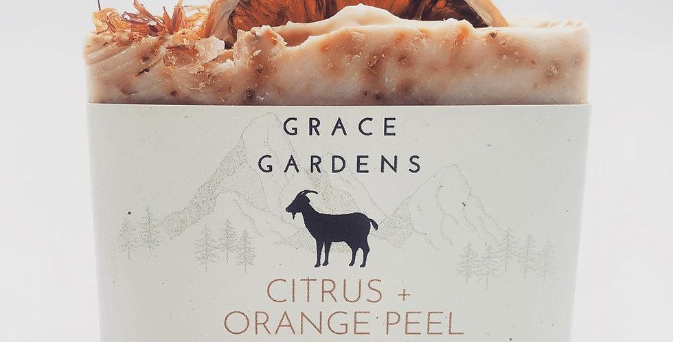 Citrus + Orange Peel