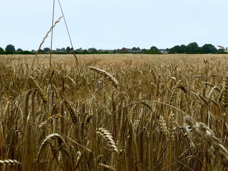 Comment bénéficier des allègements de cotisations mis en place par la Mutualité Sociale Agricole ?