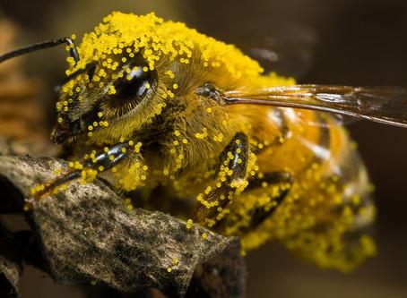 Natural vs. Artificial Pollinators